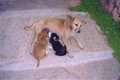 Street Dog and Pups