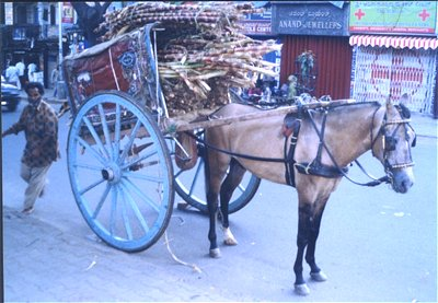 Horse Pulled Carriage (Tonga)
