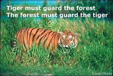 Symbiosis of Tiger and Forest