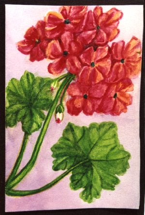 Flowers of Mysore Water-color painting by Mukta Venkatesh. See also: Artist