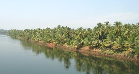 Mangalore Mangroves