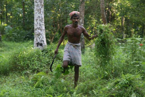 Farmer at Hosad Village
