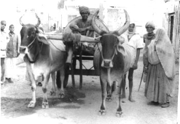 Transportation of Water in Rajasthan