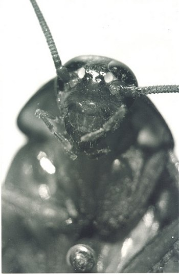 Kamat`s Insects
