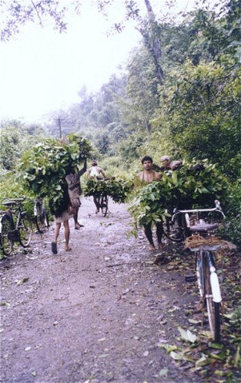 Team of Forest Workers