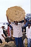 At the  Weekly Coir Market
