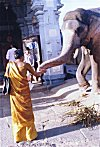 Feeding the Elephant God