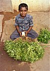 Boy Selling Curry Leaves