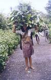 Forest Workers Fetching Leaves for Manure