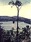 Coconut trees, river and hill