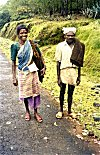 Tribal Forest Workers