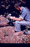 A scene in forest research, 1964