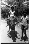 A boy riding bafellow calf, 1985