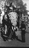The mahout guiding elephant for the ceremonial procession, 1985