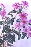 Flowers of Mysore -- water color painting by Mukta Venkatesh