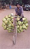 Tender Coconut Vendor