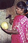 Strong woman: sickle is pre-requisite to chop off a tender coconut.