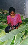 A young girl cuts the leaves to required sizes.