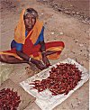 The Chili Seller