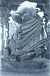 Nandi Bull, Sculpture from a Belur Temple