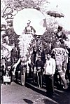 Elephants of Mysore Dasara