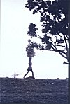 Silhouette  of a Girl Carrying Firewood