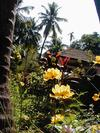Flowers, Tiles and Coconut Trees