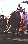 Decorated Elephant Rider