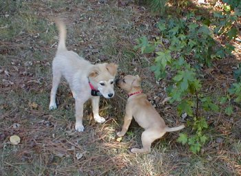 Barkley and TinTin