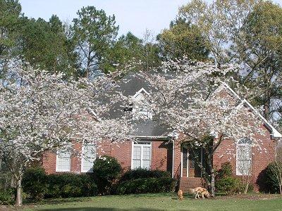 Spring in Alabama 2005