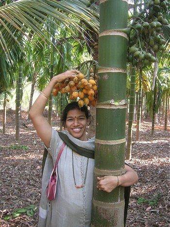 Girl Picking Low-grown Supari